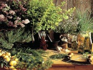 Erbe e piante aromatiche, puoi coltivarle tu stesso!
