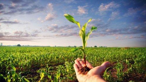 Tecnologie Alimentari e Agricoltura Biologica. Ne parliamo insieme al Dr. Montemurro