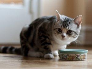 L'alimentazione naturale per gatti: la dieta Barf