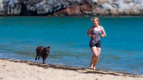 Come addestrare e allenare un cane