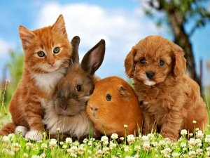 Risultati immagini per foto animali