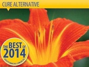 Cure alternative: dai fiori di Bach alla dieta vegetale contro i tumori