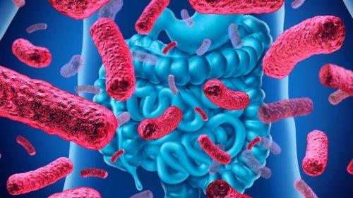 Come i batteri possono proteggerci dal Coronavirus (e da tutti gli altri virus)