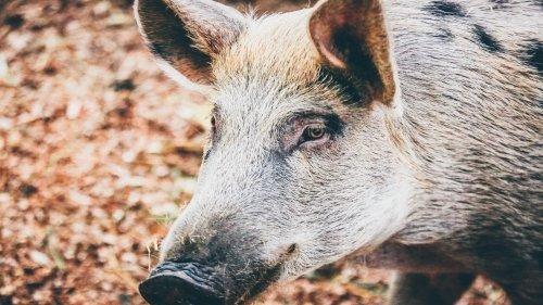5 curiosità sugli animali che non vi hanno mai svelato