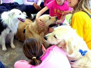 Pet Therapy: efficace anche contro il bullismo?
