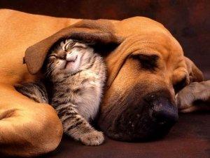 Anche cani e gatti soffrono di stress! Aiutiamoli con i Fiori di Bach