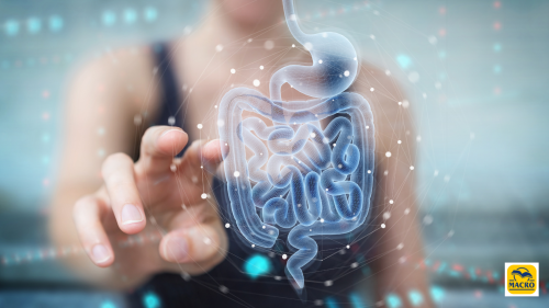 Un microbiota sano allontana le malattie neurodegenerative