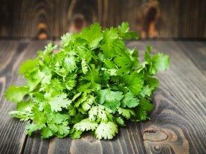 Coriandolo, erba e semi: tutti i benefici