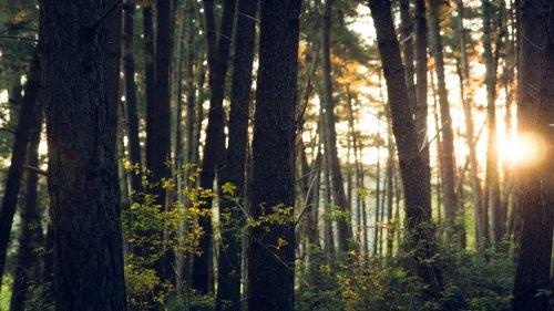 Bagno nel bosco: i consigli per praticare lo Shinrin Yoku