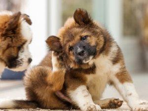 La dermatite del cane: un approccio integrato