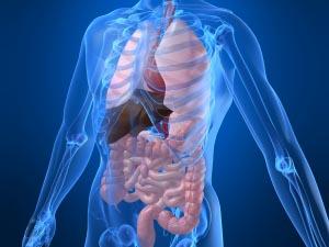 È giusto donare gli organi?
