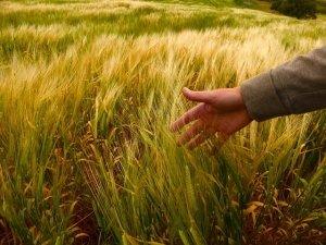 Ecovillaggi e coliving: in Italia è boom dell'abitare sostenibile