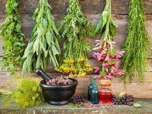 A caccia di erbe officinali e piante: rimedi naturali, usi e ricette