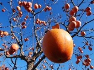 Frutta e verdura a novembre
