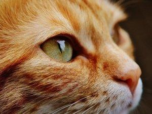 7 consigli Macro per vivere con il proprio animale