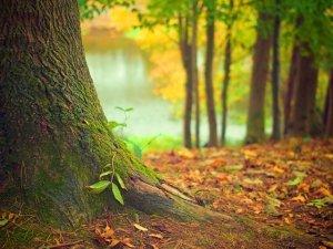La Vita Segreta degli Alberi: alla scoperta di un mondo nascosto