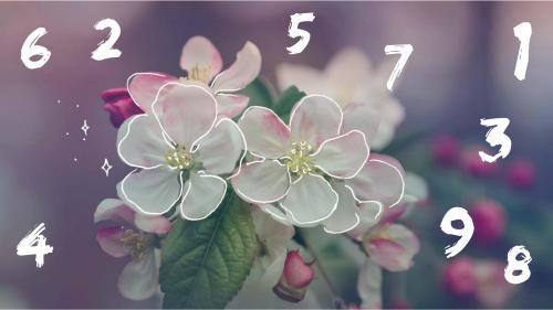 Numerologia e Fiori di Bach