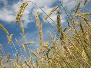 Terra dei fuochi e agricoltura biodinamica