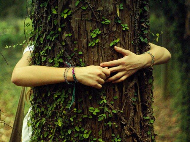 Abbracciare gli alberi: il potere terapeutico del bosco