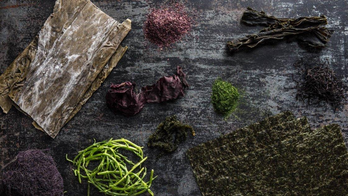 Alghe brune, un mare di benefici