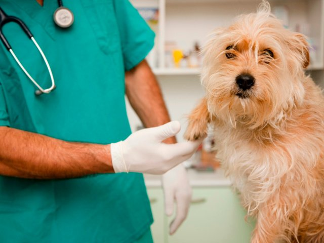 Allergie e intolleranze nei cani e nei gatti