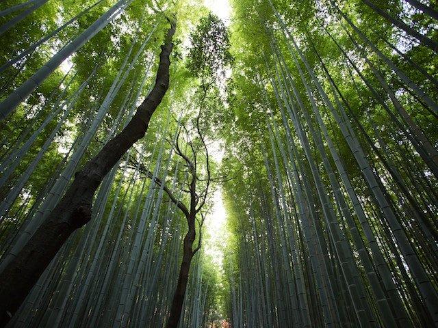 Potenziare il nostro sistema immunitario nel bosco