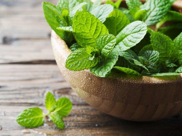 Piante Di Menta : Salvia menta e malva le erbe piante aromatiche di maggio
