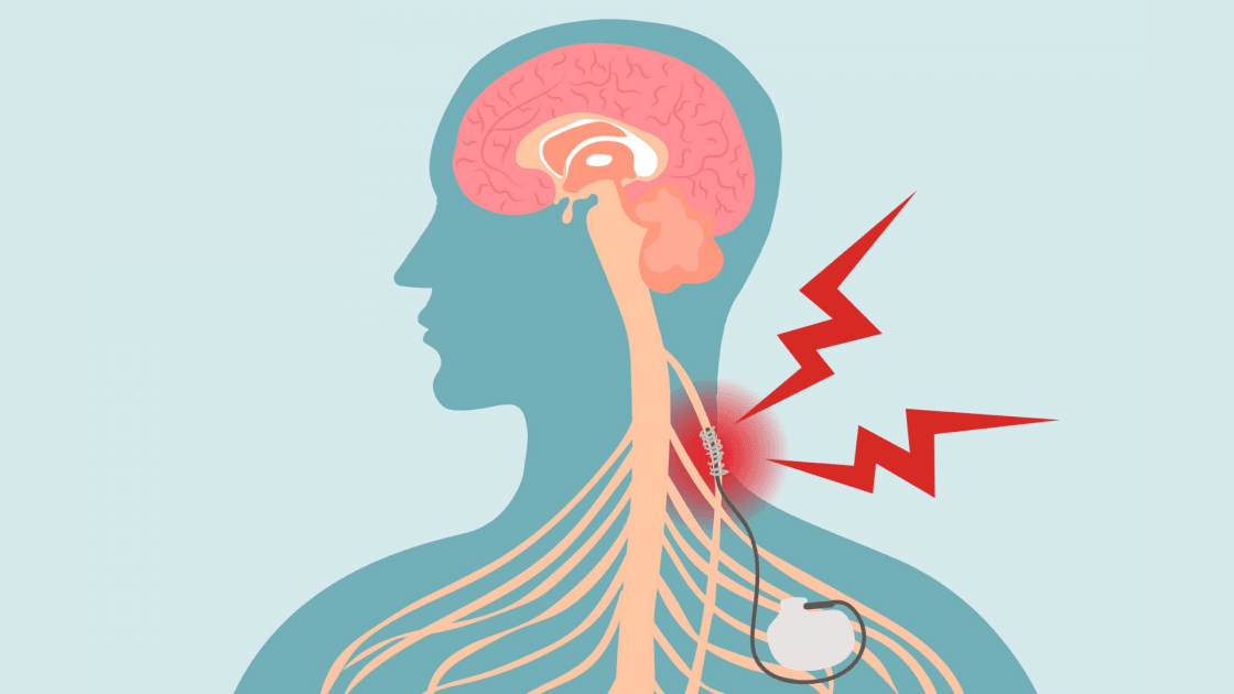 Nervo vago: comunicazione bidirezionale cervello-visceri