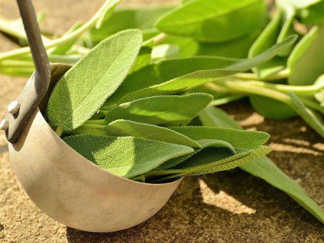 Salvia, benefica erba culinaria