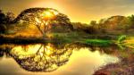 Simbologia dell'albero: il significato dell'albero della vita