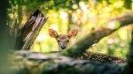 I segreti degli animali che vivono nel bosco
