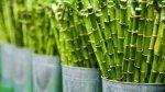 Bambù: ecologia, versatilità… e una ricetta con i germogli!
