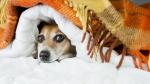 Il tuo cane starnutisce? Ecco un ottimo rimedio omeopatico