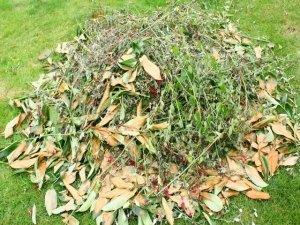 Come fare il compost: compostaggio domestico
