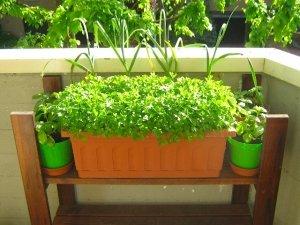 Coltivare erbe e piante aromatiche, anche sul tuo balcone!