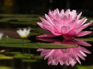 L'accettazione totale: la pratica buddista per vivere senza paura