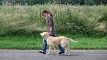 5 esercizi per allenare un cane
