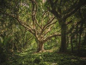 Gli alberi: anche loro hanno internet