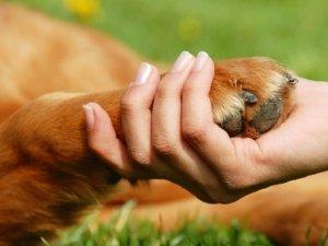 Pet Therapy: il rapporto animale paziente