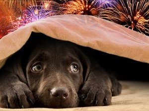 Animali e botti di Capodanno: i consigli del Veterinario