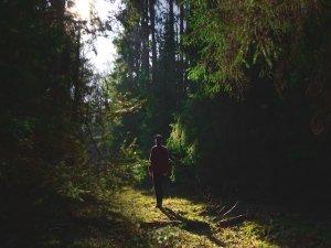 Passeggiare nel bosco: i benefici