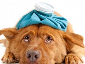 La medicina non convenzionale in veterinaria: focus sull'omeopatia