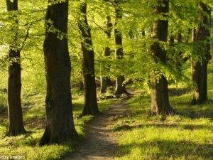 Effetto Biofilia: il misterioso legame tra uomo e natura
