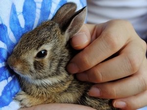 Il coniglio: un'adozione consapevole