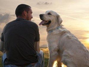 Pet Therapy: l'importanza della cooperazione