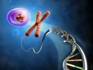 L'Epigenetica e i suoi meccanismi