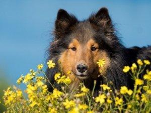Gli animali e i fiori di Bach