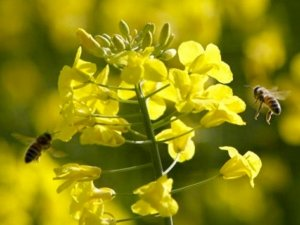 Le proprietà farmacologiche del propoli: focus sull'asma