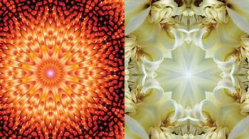 Lo Spirito nelle Piante - Viaggio dell'Anima attraverso le immagini imagami