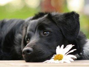 Animali e cure naturali: focus sui fiori di Bach